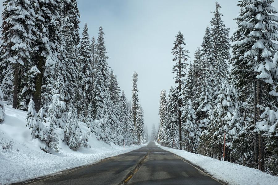 フリー写真 雪を被る木々と道路の風景