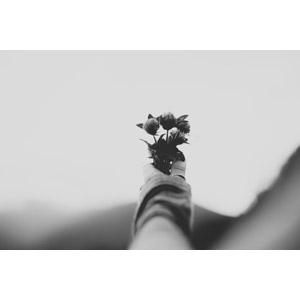 フリー写真, 人体, 手, 人と花, 植物, 花