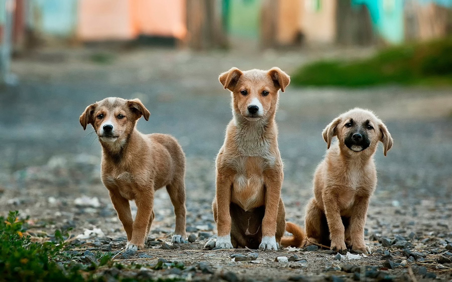 フリー写真 三匹の子犬たち