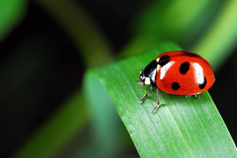 てんとう 虫 の サンバ