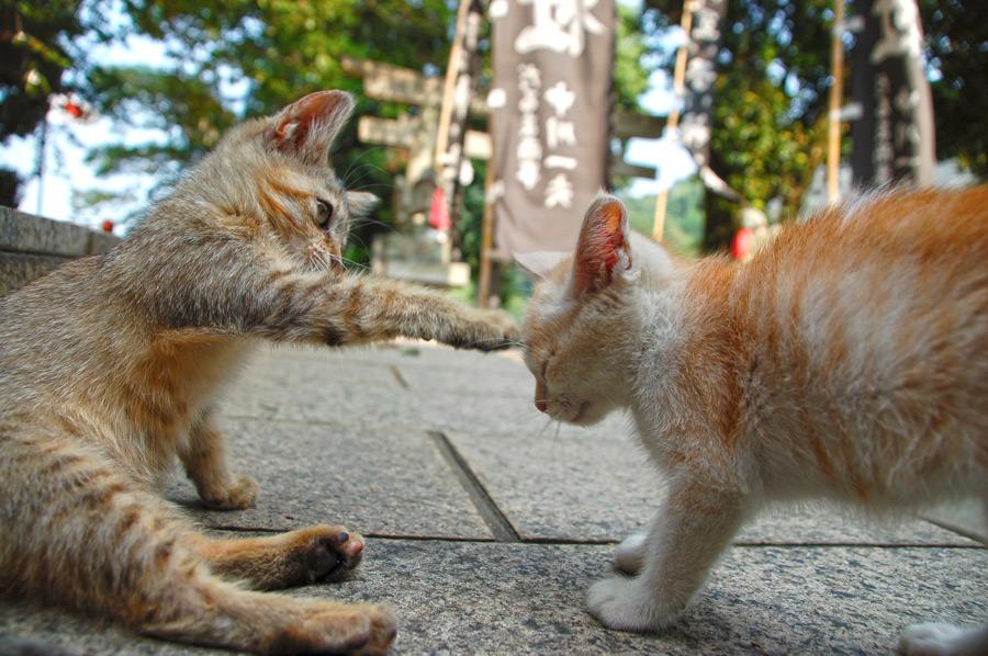 フリー写真 叩く子猫と叩かれる子猫