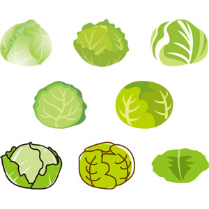 フリーイラスト, ベクター画像, AI, 食べ物(食料), 野菜, キャベツ
