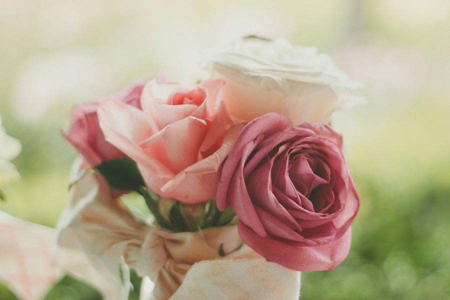 フリー写真 バラの花