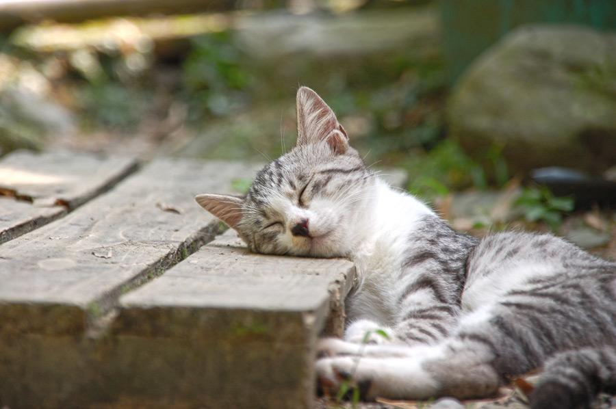 フリー写真 木の板を枕にして寝ている子猫