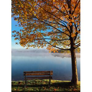 フリー写真, 風景, 樹木, 紅葉(黄葉), 秋, ベンチ, 湖, 霧(霞)
