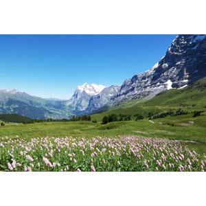 フリー写真, 風景, 自然, 山, アルプス山脈, スイスの風景, 花畑, 丘
