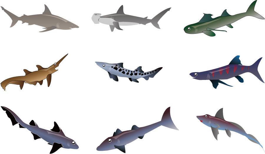 フリーイラスト 9種類のサメのセット