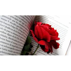 フリー写真, 植物, 花, 薔薇(バラ), 赤色の花, 本(書籍)