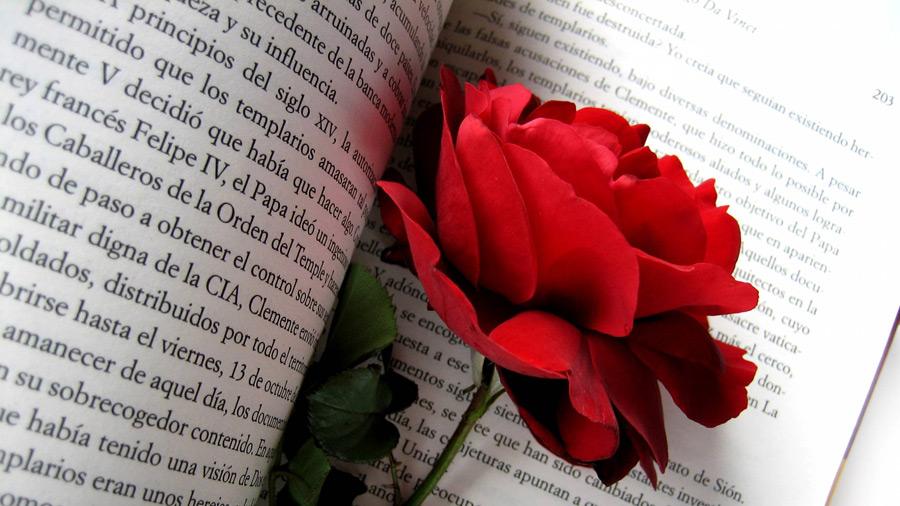 フリー写真 洋書と赤いバラの花