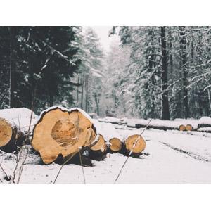 フリー写真, 風景, 森林, 木材, 丸太, 雪, 冬, 林業