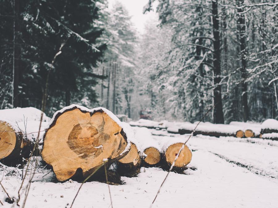 フリー写真 伐採された木材と林の雪景色
