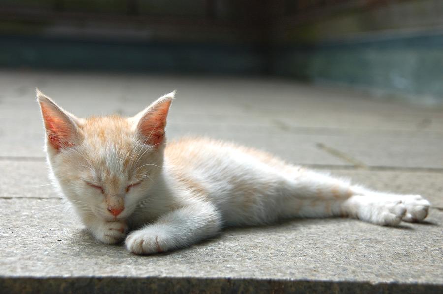 フリー写真 石畳の上で寝ているかわいい子猫