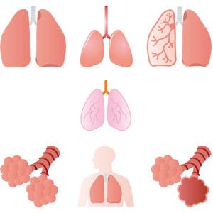 フリーイラスト, ベクター画像, AI, 人体, 器官(臓器), 内臓, 肺, 肺胞