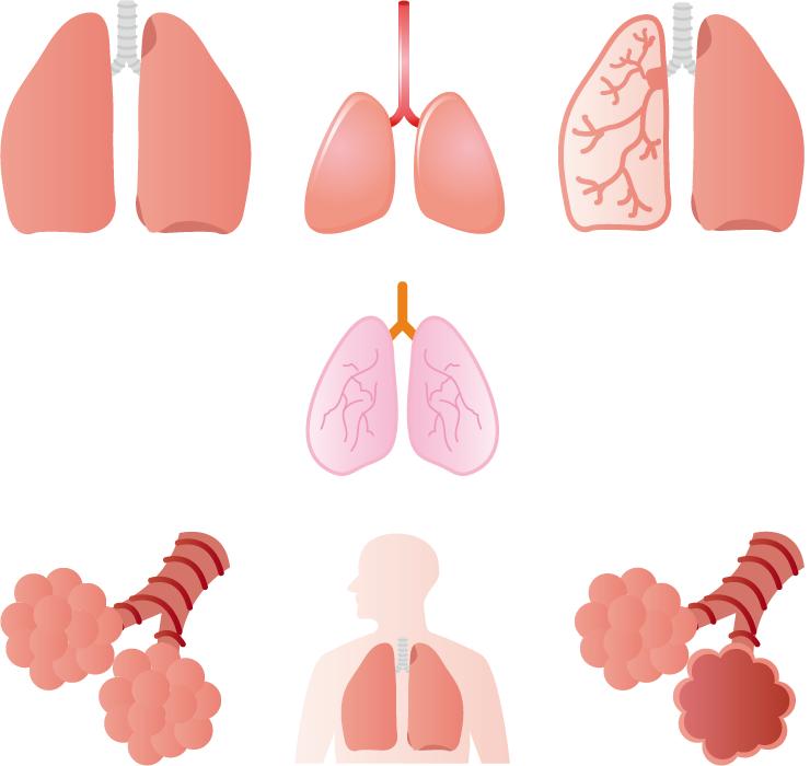 フリーイラスト 7種類の肺と肺胞のセット