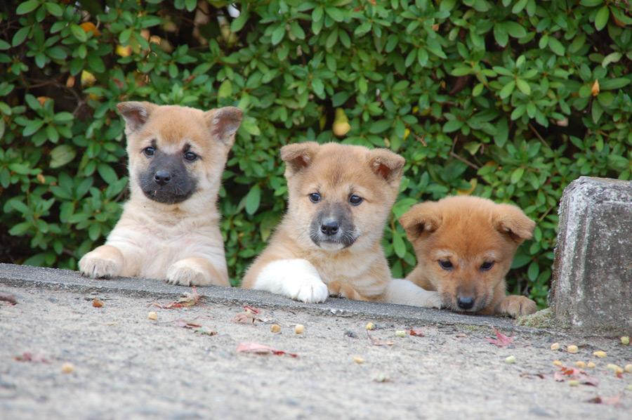 フリー写真 三匹の子犬