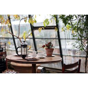 フリー写真, 風景, ティータイム, 飲み物(飲料), コーヒー(珈琲), コーヒーカップ, 食卓(テーブル), 植木鉢, 観葉植物