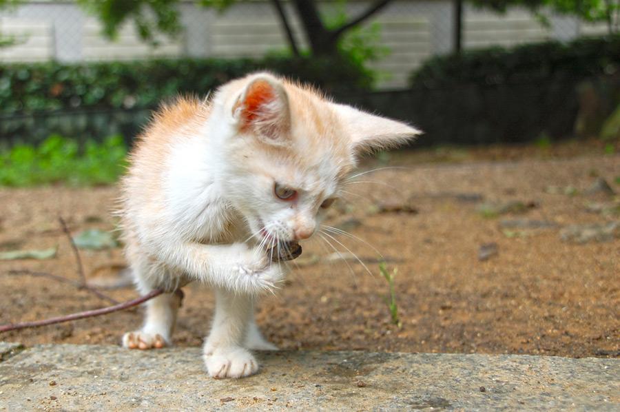 フリー写真 歌うロックローラーな子猫