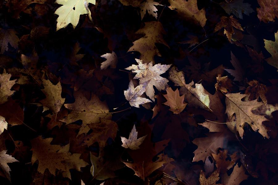 フリー写真 落ち葉の風景