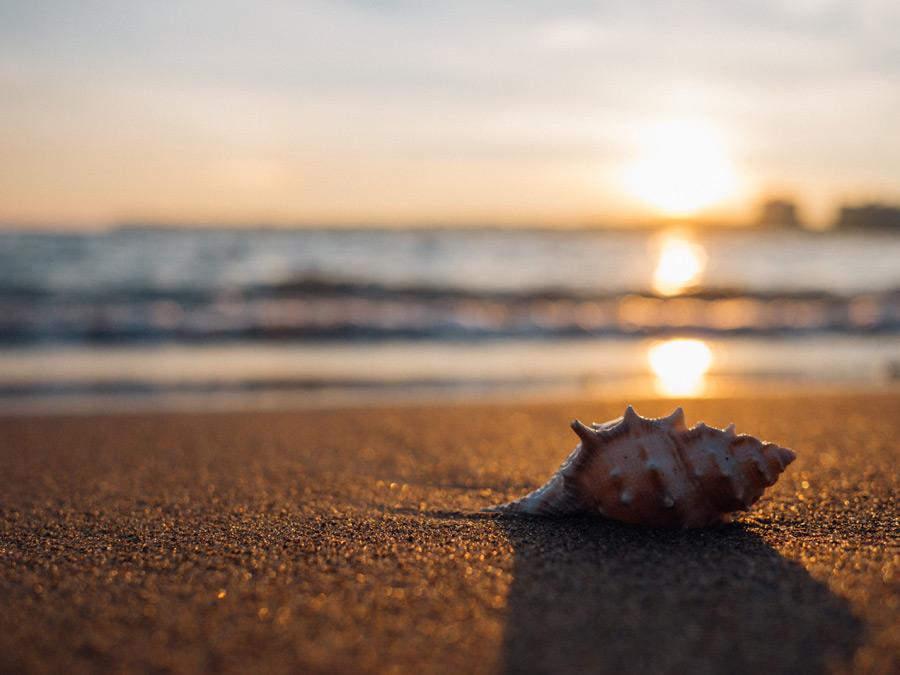フリー写真 砂浜の上の貝殻と夕日の風景