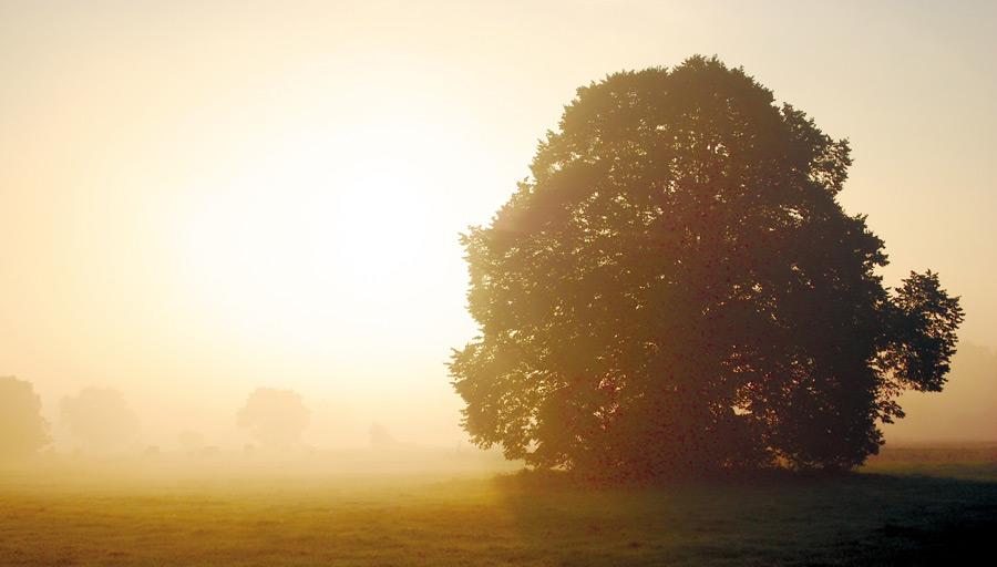 フリー写真 朝日と霧と木の風景