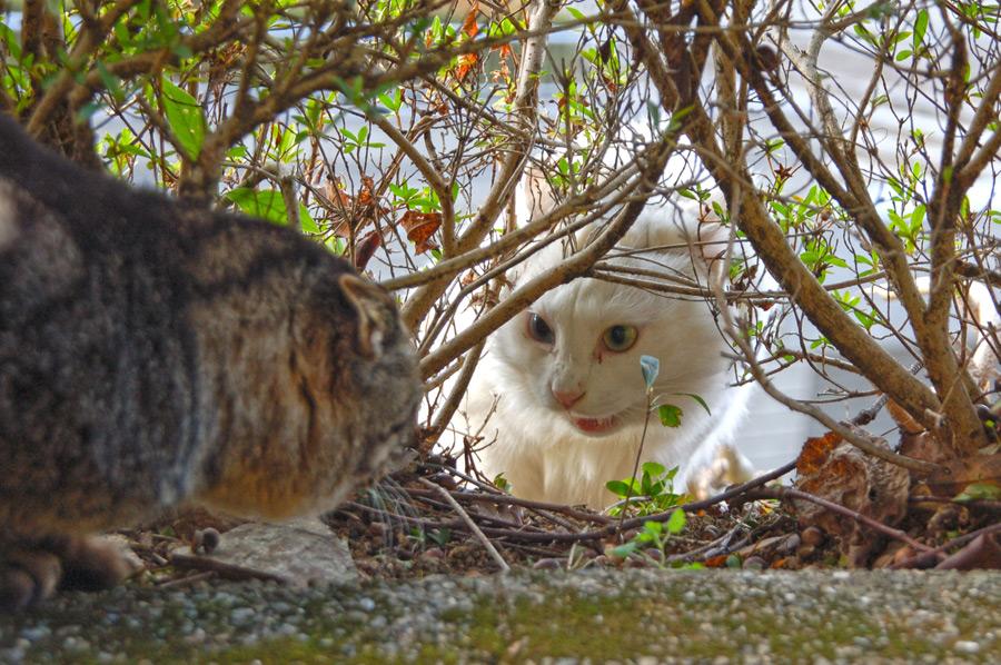 フリー写真 ケンカ中の猫