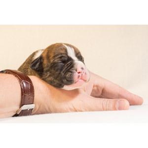 フリー写真, 動物, 哺乳類, 犬(イヌ), 子犬, 寝る(動物), 人と動物, 手