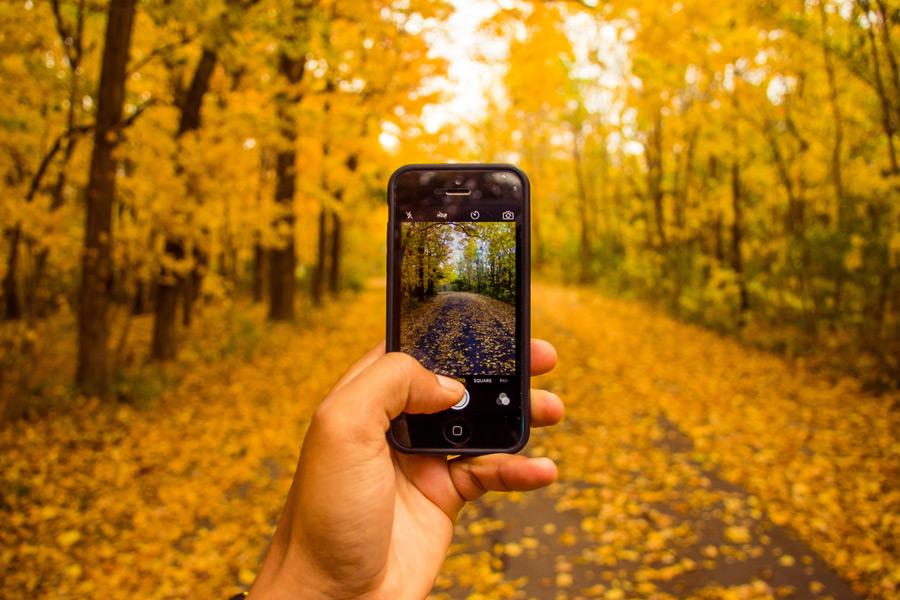 フリー写真 スマホで黄葉した森の道を写真に撮る手