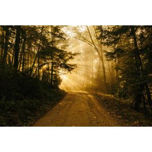 フリー写真, 風景, 自然, 森林, 小道, 木漏れ日, 太陽光(日光)