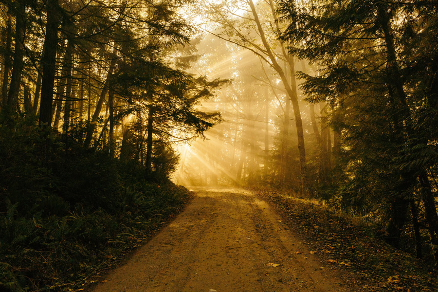 フリー写真 森の道と木漏れ日の風景