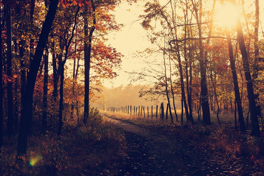 フリー写真 ポーランドの秋の田舎道の風景