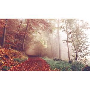 フリー写真, 風景, 小道, 落葉(落ち葉), 秋, 紅葉(黄葉), 霧(霞), 森林, 樹木, ドイツの風景