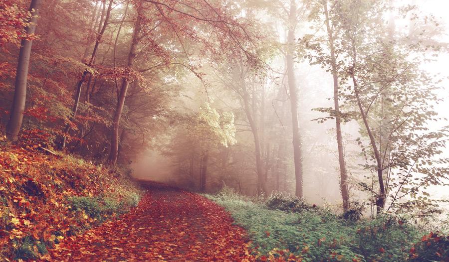 フリー写真 霧のかかる森の道の風景