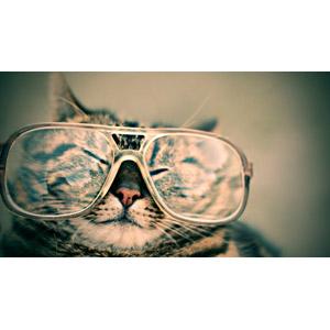 フリー写真, 動物, 哺乳類, 猫(ネコ), キジトラ猫, 眼鏡(メガネ)