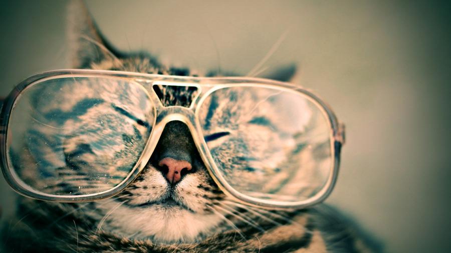 フリー写真 大きな眼鏡をかけさせられた猫