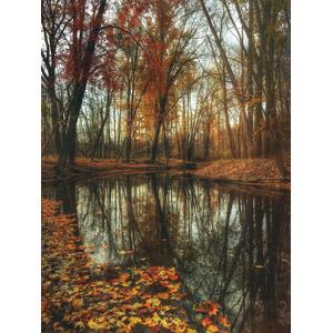 フリー写真, 風景, 樹木, 紅葉(黄葉), 落葉(落ち葉), 秋, 池, アメリカの風景, ミシガン州