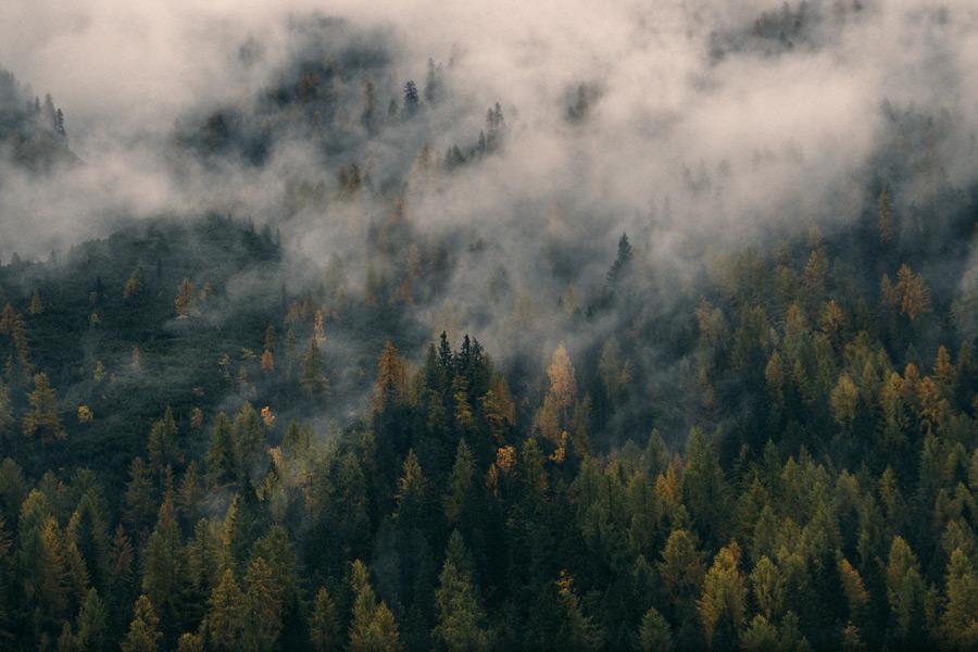 フリー写真 霧のかかる山の木々