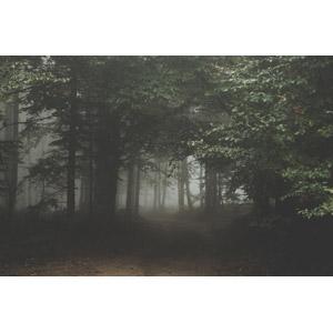 フリー写真, 風景, 自然, 森林, 霧(霞), ポーランドの風景