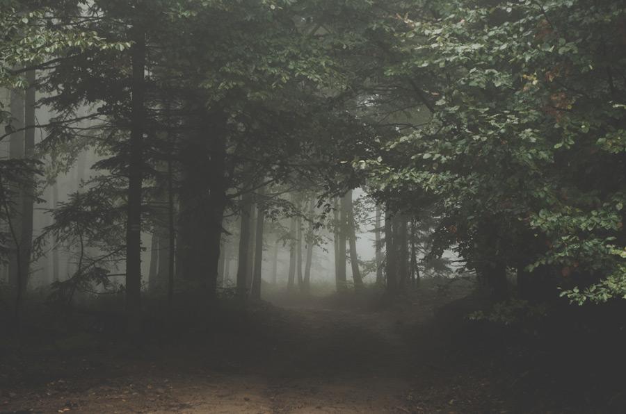 フリー写真 ポーランドの霧のかかる森の風景