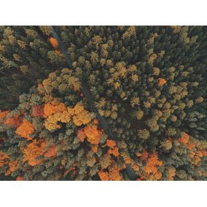フリー写真, 風景, 道路, 森林, 紅葉(黄葉), 秋