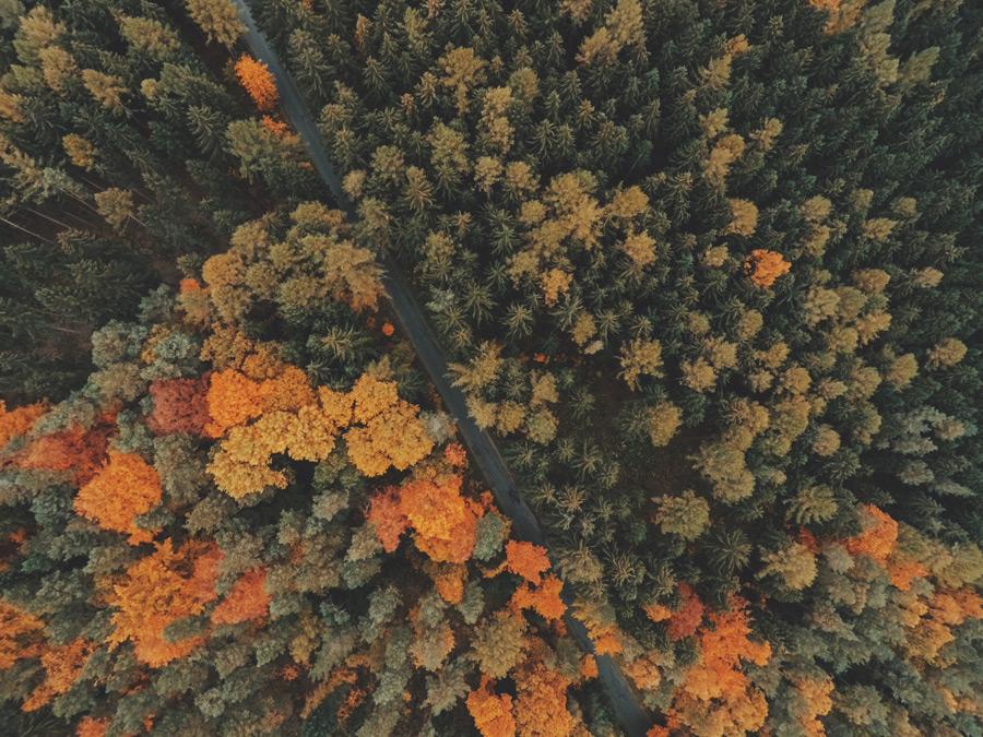 フリー写真 上空から見る紅葉の始まる森と道路の風景