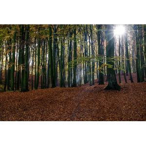 フリー写真, 風景, 自然, 森林, 落葉(落ち葉), 木漏れ日, 太陽光(日光), 秋
