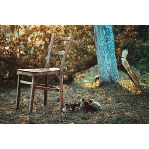 フリー写真, 風景, 椅子(イス), 動物, 鳥類, アヒル, 雛(ヒナ), 子供(動物)