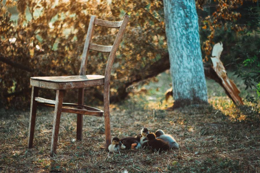 フリー写真 壊れた椅子とアヒルの雛たち