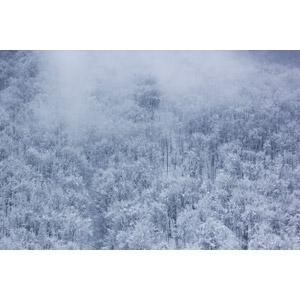 フリー写真, 風景, 自然, 森林, 雪, 冬