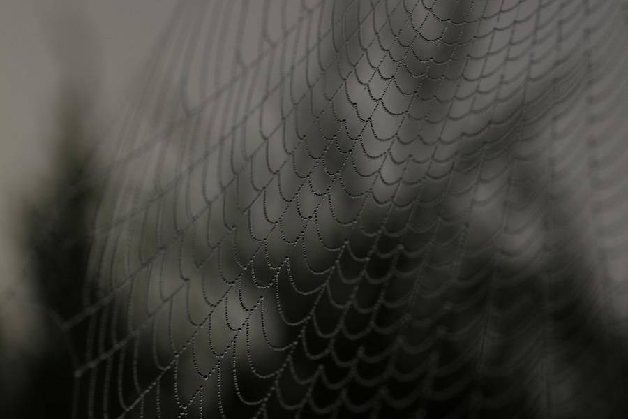 フリー写真 水滴のついたクモの網