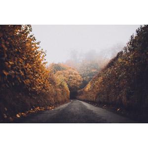 フリー写真, 風景, 小道, 紅葉(黄葉), 秋, 霧(霞), 田舎, イギリスの風景