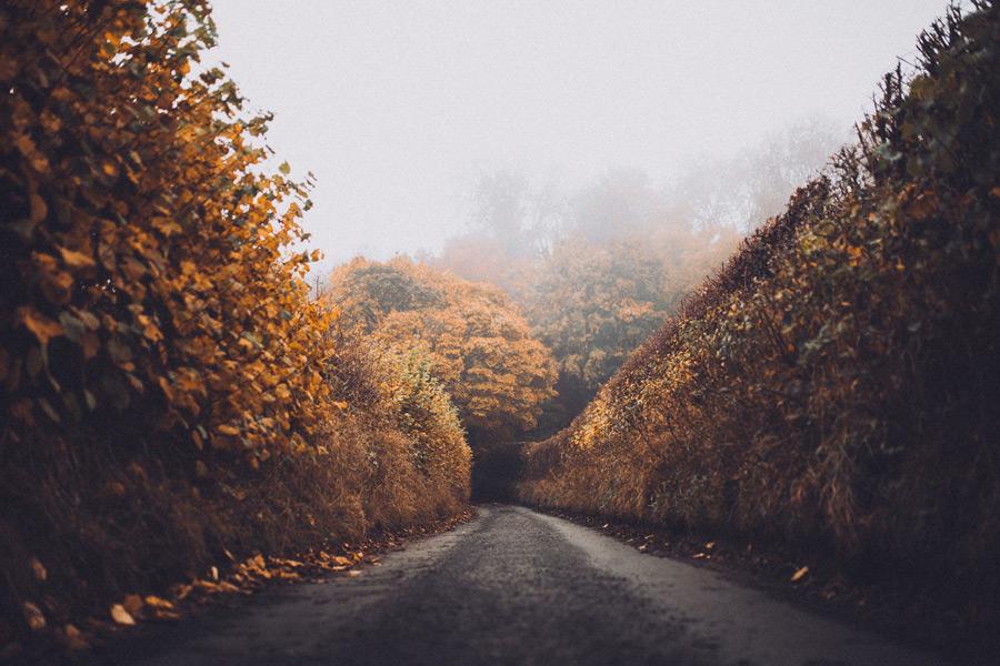 フリー写真 紅葉した木々と田舎道の風景