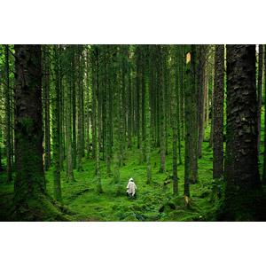 フリー写真, 風景, 森林, 樹木, 人と風景, 後ろ姿, 緑色(グリーン), イギリスの風景