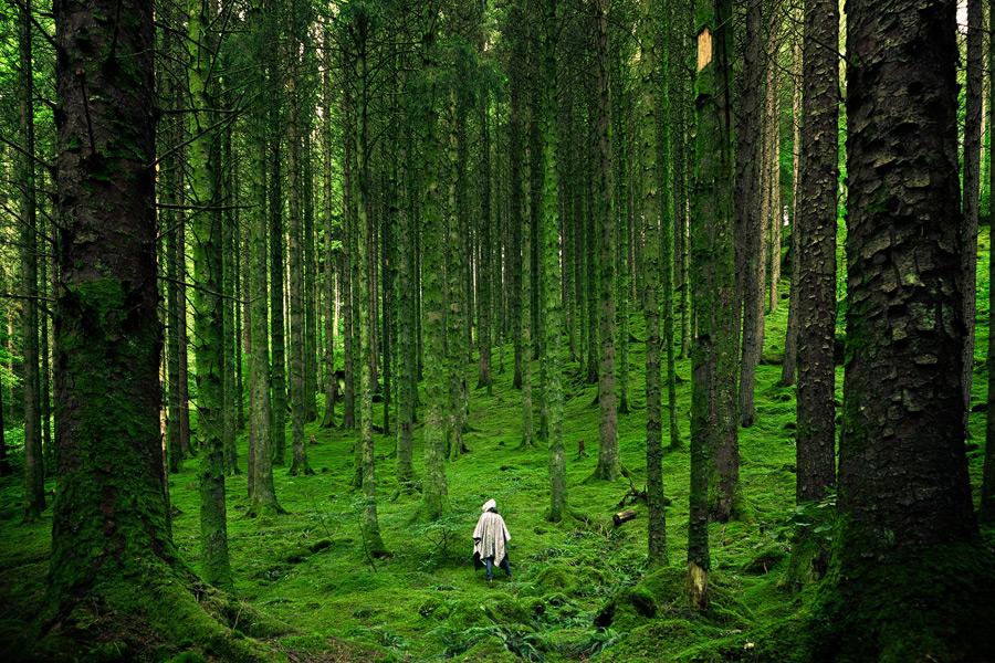 フリー写真 森の中を歩く人物