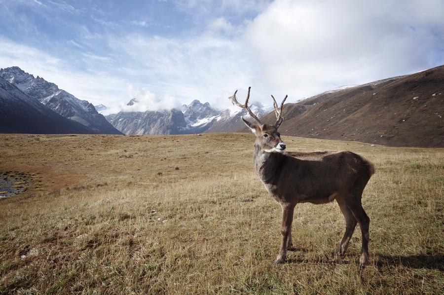 フリー写真 口白鹿と山の風景